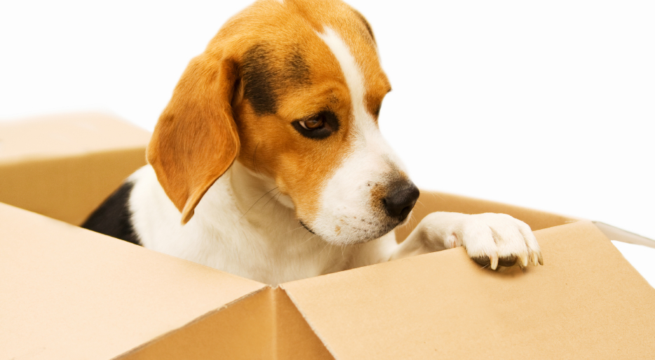 clipart relocation dog in box |